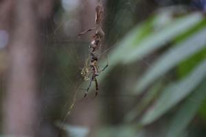 A Patient Spider